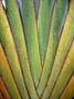 palmblad.jpg
