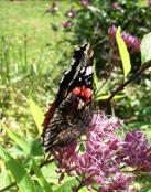vlinder_van_compassie.jpg