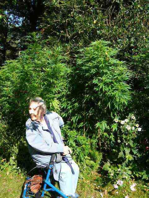 marihuana_voor_pijnlijke_neuropathie.jpg