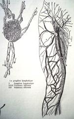 Lymfeknoop en lymfevaten van het been, JMKH