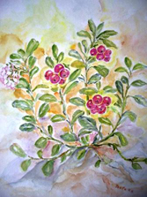 veenbes, cranberry, door M.P.H.Keppel Hesselink van Blommestein