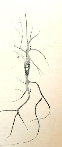 zenuwcel.jpg